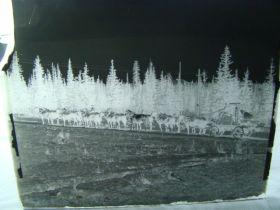 "1908-10 T.J. Hileman Glass Plate Negative ""14 Horse Team Hauling Hoist Cripple Creek"""